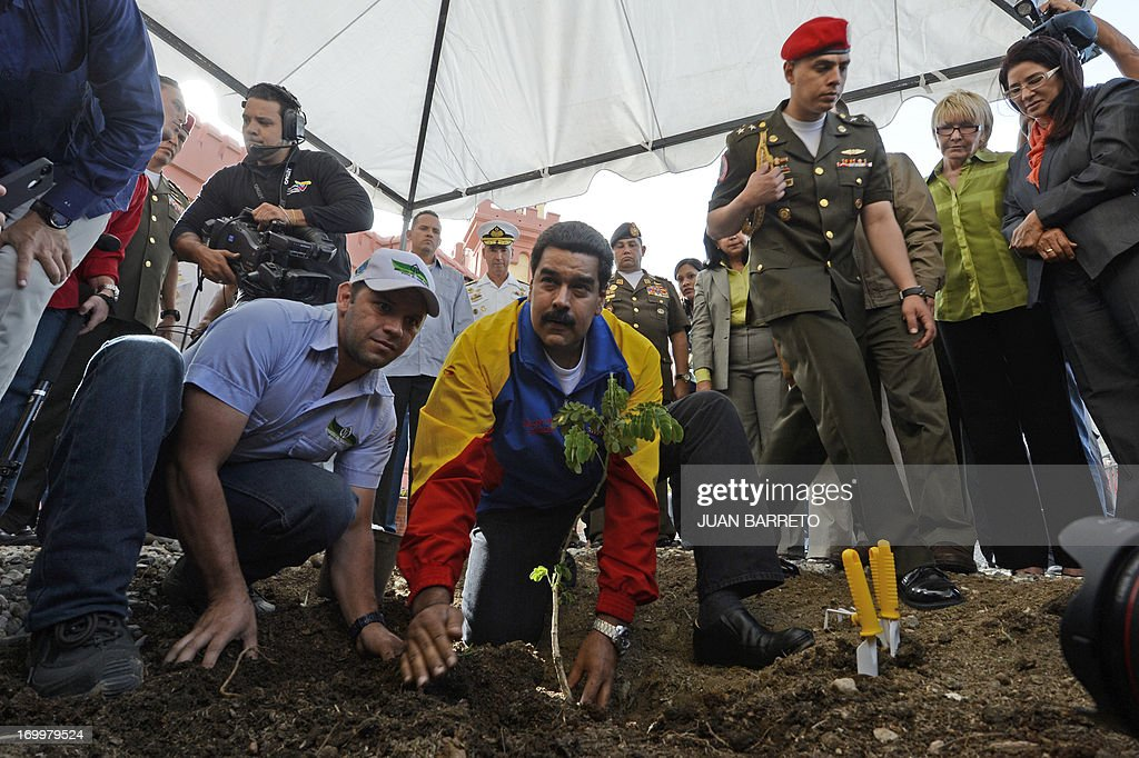 Venezuelan President Nicolas Maduro (R), plants a tree during a ceremony three months after Hugo Chavez's death, at the Cuartel de la Montana in Caracas, on June 5, 2013. AFP PHOTO/JUAN BARRETO