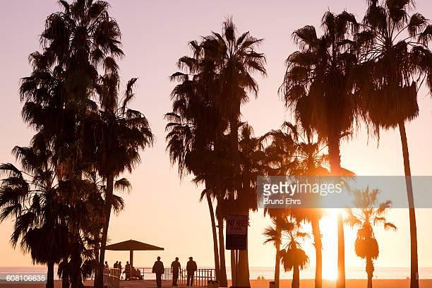 Venice beach in sunset