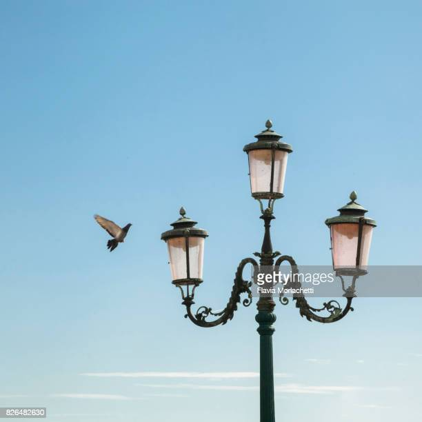 Venice street lamp and pigeon