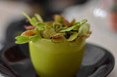 closeup of venus flytrap waiting/ plant