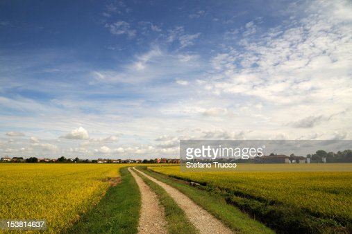 Vercelli and rice fields