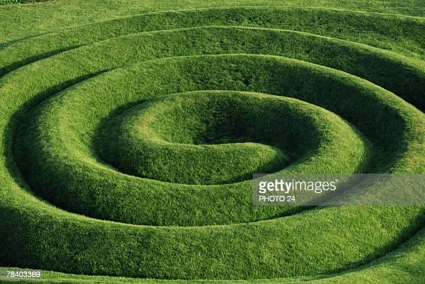 Verdant topiary garden maze
