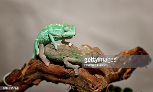 Verde de placer ;) : Foto de stock