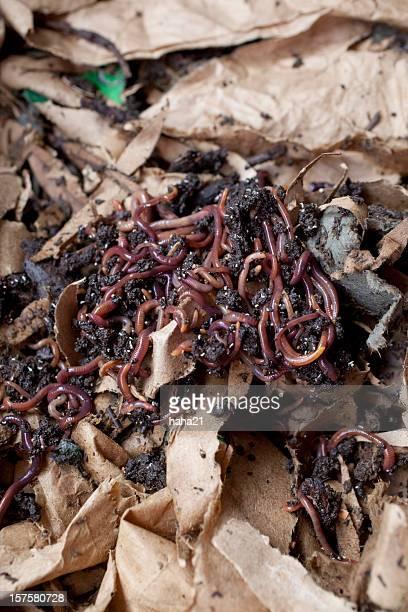Vermicompost Compost Worm Bin