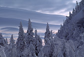 USA, Vermont, Mount Mansfield, trees covered in snow, winter