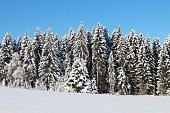 Tanne, Winter, Landschaft, Schnee, Allgäu, Bayern, blauer Himmel