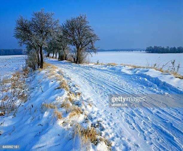 Verschneiter Landweg durch die Felder gesaeumt von Obstbaeumen