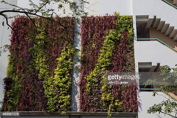Vertical garden / green wall at Kasetsart Universitys women's dormitory Fans of vertical gardens or 'green walls' say governments should provide...
