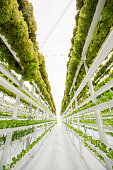 Growing herbs and leafy greens in a super water efficient hydroponic greenhouse on a vertical system of rain gutters. This farm uses only 1% of water traditionally used by farming similar crops.