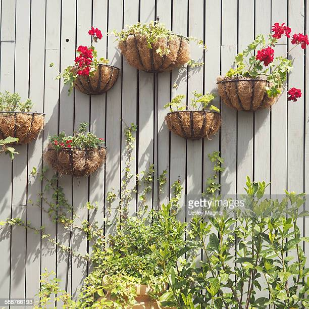 Vertical wall plants or garden