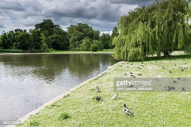 Verulamium Park, St Albans, Hertfordshire
