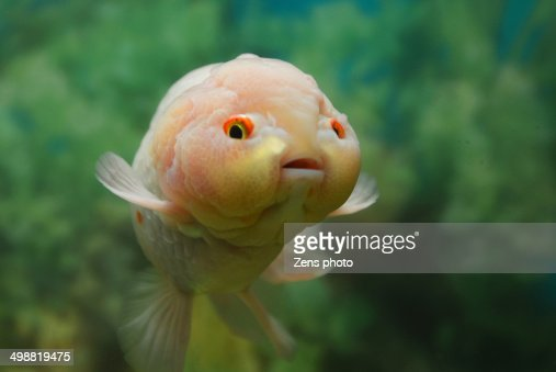 Very Cute Fish With A Baby Face Stock Photo Getty Images