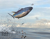 Very high jump of predator tuna fish to reach prey 3d Render