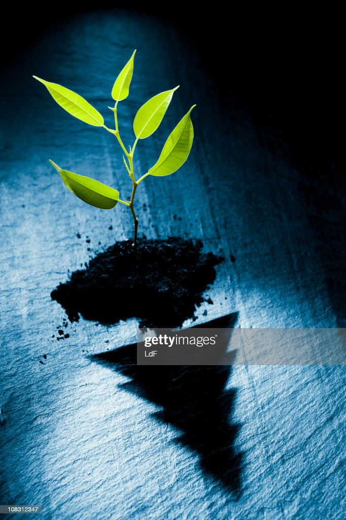 Very young plant growing projecting a christmas tree shadow : Stock Photo
