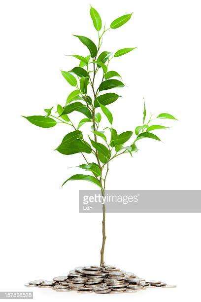 Very young tree isolated with coins