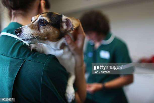 A vet cares for a dog at the new purpose built Links Vet Animal Hospital and Lothian Canine Rehabilitation Centre on September 1 2009 in Haddington...