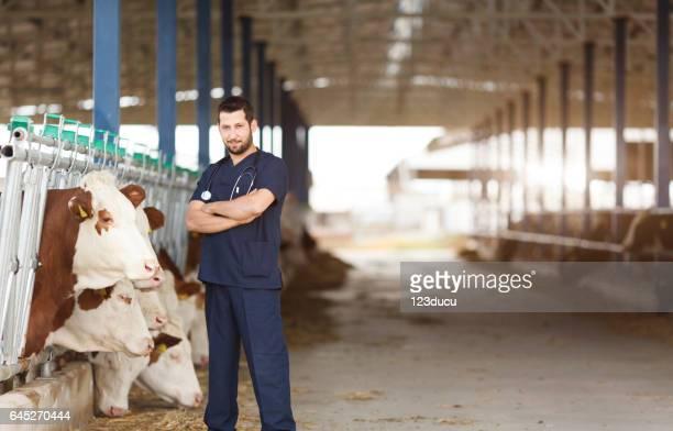 Vérification des vaches en Grange au crible