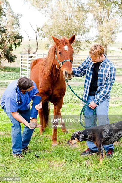 Tierarzt überprüfen Pferdes verletzte Bein und Eigentümer Uhren