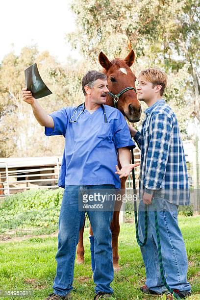 Tierarzt über X-ray mit Pferd-Eigentümer