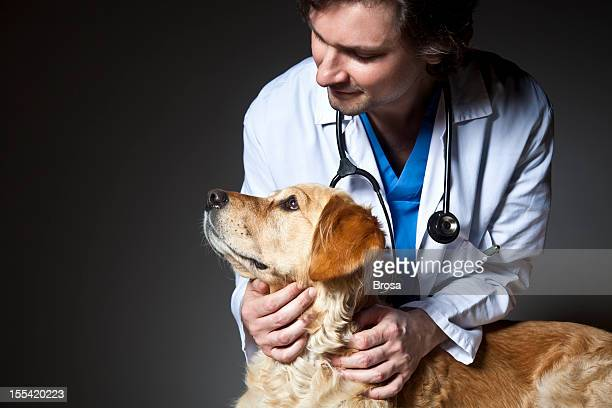 Vétérinaire examiner un chien