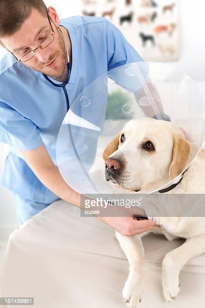 Tierarzt untersuchen einen Hund