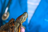 vet holding a turtle close-up