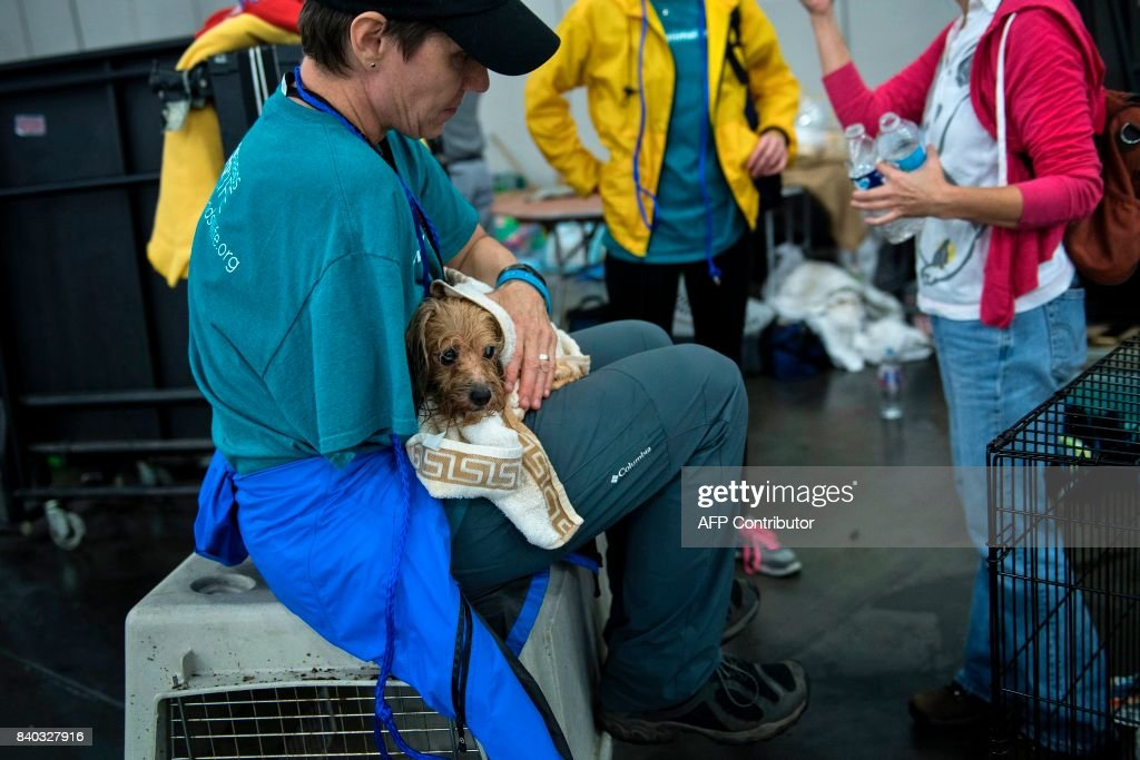 A vet holds a dog at a shelter in the George R. Brown Convention Center during the aftermath of Hurricane Harvey on August 28, 2017 in Houston, Texas. Rescue teams in boats, trucks and helicopters scrambled Monday to reach hundreds of Texans marooned on flooded streets in and around the city of Houston before monster storm Harvey returns. / AFP PHOTO / Brendan Smialowski