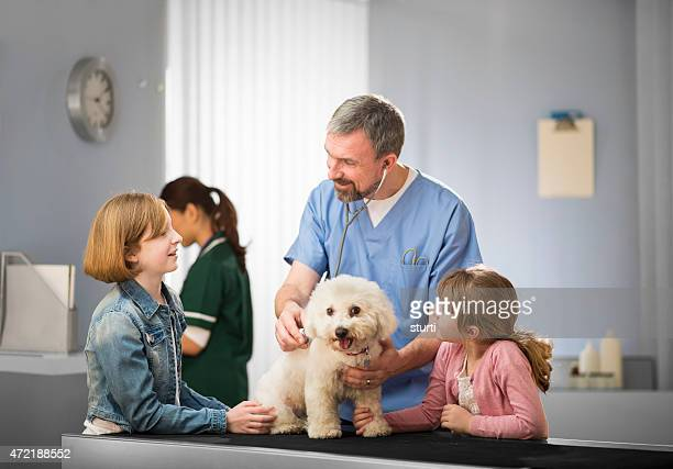 vet listening to dog's heartbeat