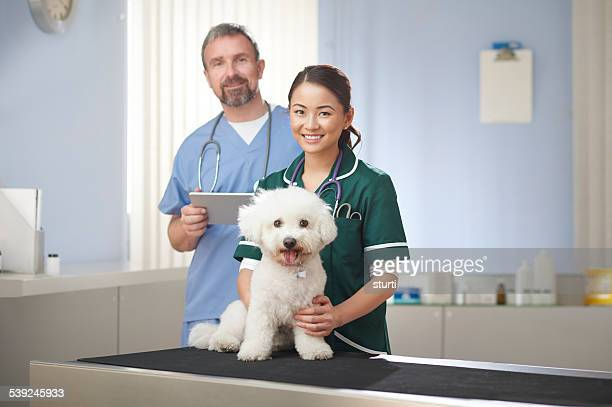 Veterinario personal de enfermería y veterinario