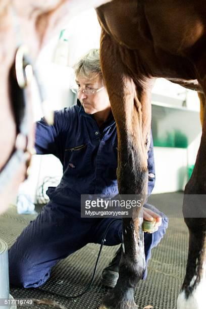 Tierarzt Scannen Pferde Bein