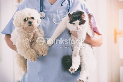 Vet with dog and cat : Stock Photo