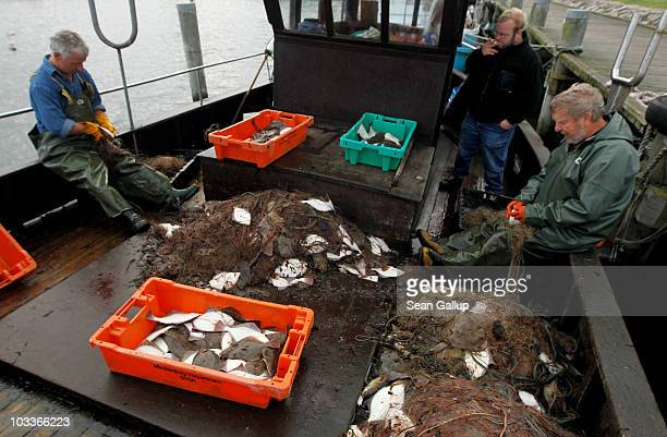 Veteran fishermen Klaus Raack and Reinhard Lay pull plaice flounder and cod from the fishing net they hauled in earlier in the day in the Baltic Sea...