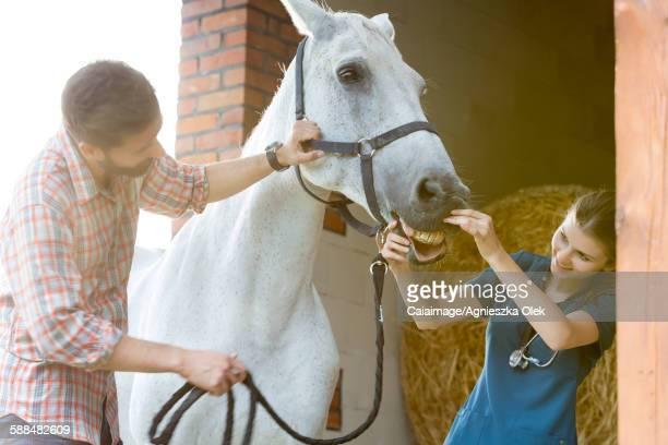 Veterinarian checking horseÕs teeth