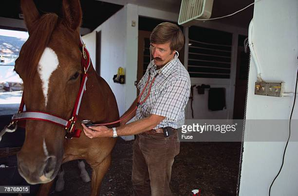 Veterinarian Checking the Heartbeat of a Horse