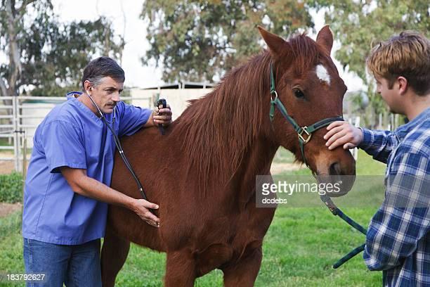 Veterinarian Examines A Horse