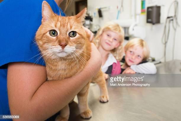 Veterinarian examining cat in vet's surgery