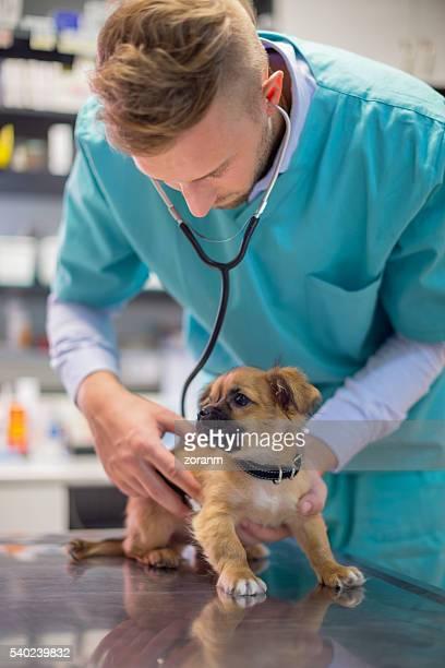 Analyse vétérinaire joli chiot