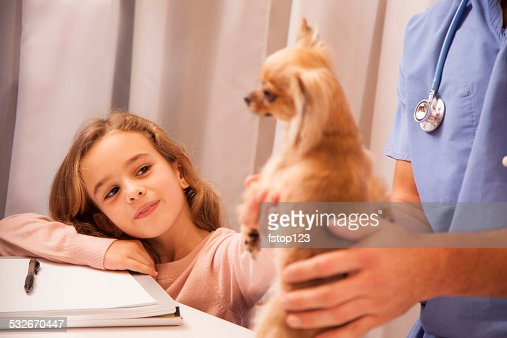 Veterinarian holds Chihuahua dog. Little girl pet owner pets her. : Stock Photo