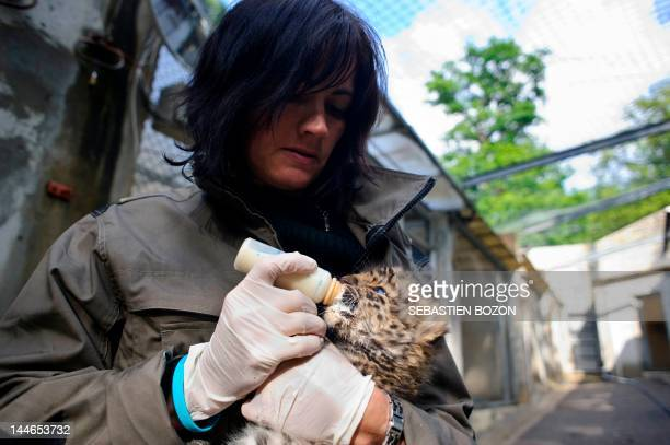 A veterinarian of the Mulhouse zoo bottlefeeds 'Argoun' a onemonthold Amur leopard on May 16 2012 at the zoo in Mulhouse eastern France Amur leopards...