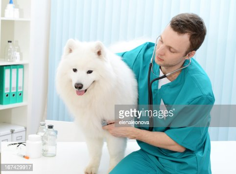 veterinarian : Stock Photo