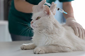 Veterinarian vaccinating cat in clinic