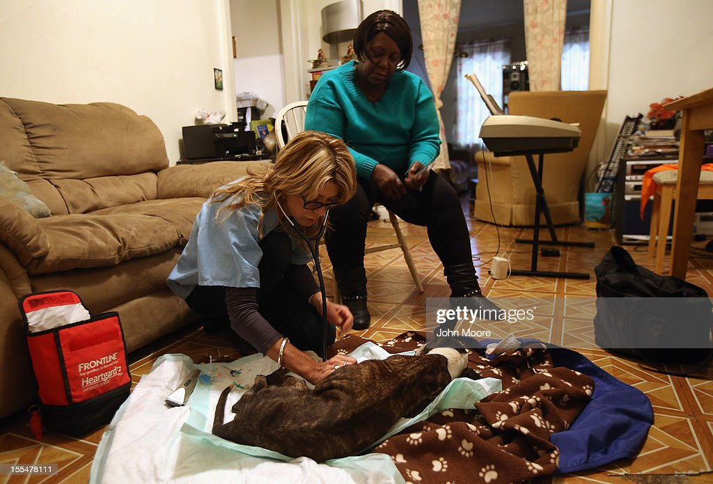Veterinarian Wendy McCulloch euthanizes Alberta Fergus' pet dog Sugar, 13, who had terminal cancer, at Fergus' apartment on November 4, 2012 in New York City. McCulloch runs Pet Requiem, a home veterinary service designed to provide geriatric care and in-home euthanasia for dying pets in the New York and New Jersey area. She paid a house call and brought a free load of groceries to Fergus, who is disabled and homebound, as a gesture to a pet owner affected by Superstorm Sandy.