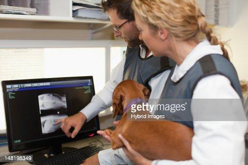 Veterinarians examining x-rays in office