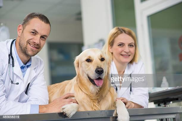 Veterinarians In The Animal Hospital