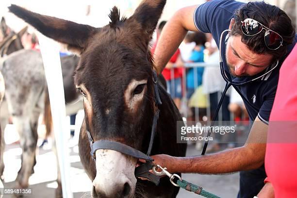 A veterinary checks a dunkey before the 86th Palio dei Ciuchi on August 14 2016 in Roccatederighi near Grosseto Italy Palio dei Ciuchi' represents...