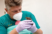 Veterinary examining toad