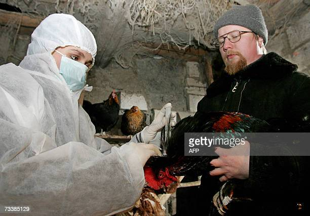 A veterinary inoculates a hen against the bird flu virus in a private hencoop in a village of Konstantinovo some 40 kms outside Moscow 21 February...