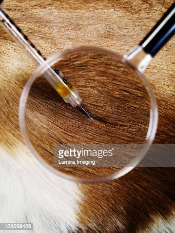 veterinary medicine : Stock Photo