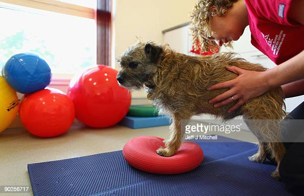 A veterinary physiotherapist works with a dog at the new purpose built Links Vet Animal Hospital and Lothian Canine Rehabilitation Centre on...