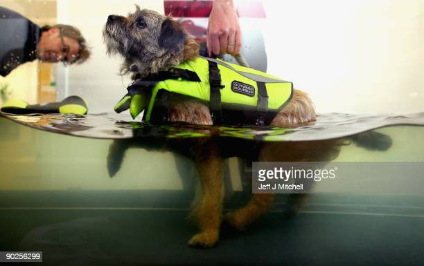 A veterinary physiotherapist works with a dog on the water walker at the new purpose built Links Vet Animal Hospital and Lothian Canine...